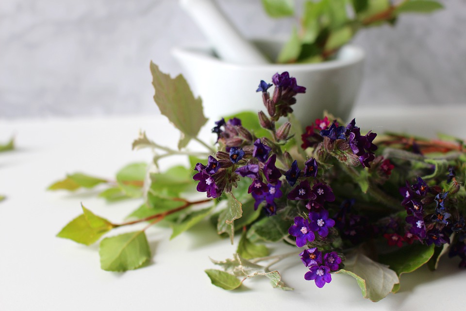 medicinal-flower-4246085_960_720